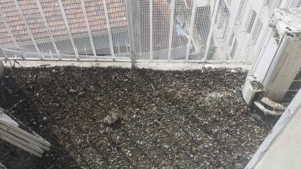 Hygi 3d intervient dans la d sinfection de fientes de pigeons pour les entreprises r sidences - Entreprise desinfection punaises lit ...